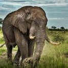Botswana - Elefant - © www.ederoswin.at
