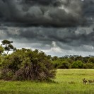 Botswana - Wildhunde - © www.ederoswin.at